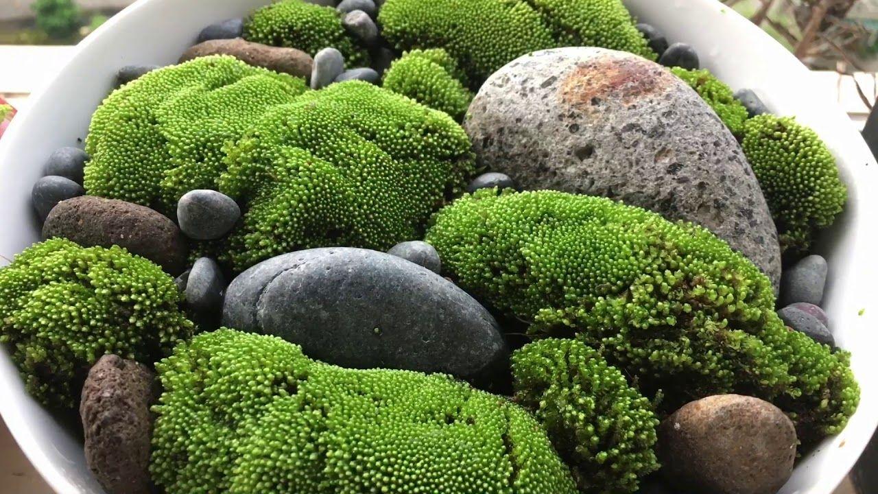 Moss garden by Cherie Chi