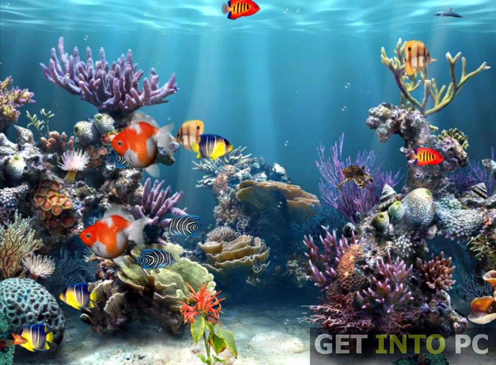 Fish Aquarium Screensaver Free Download Windows 7 Aquarium Backgrounds Free Wallpaper For Computer Animated Wallpaper For Pc