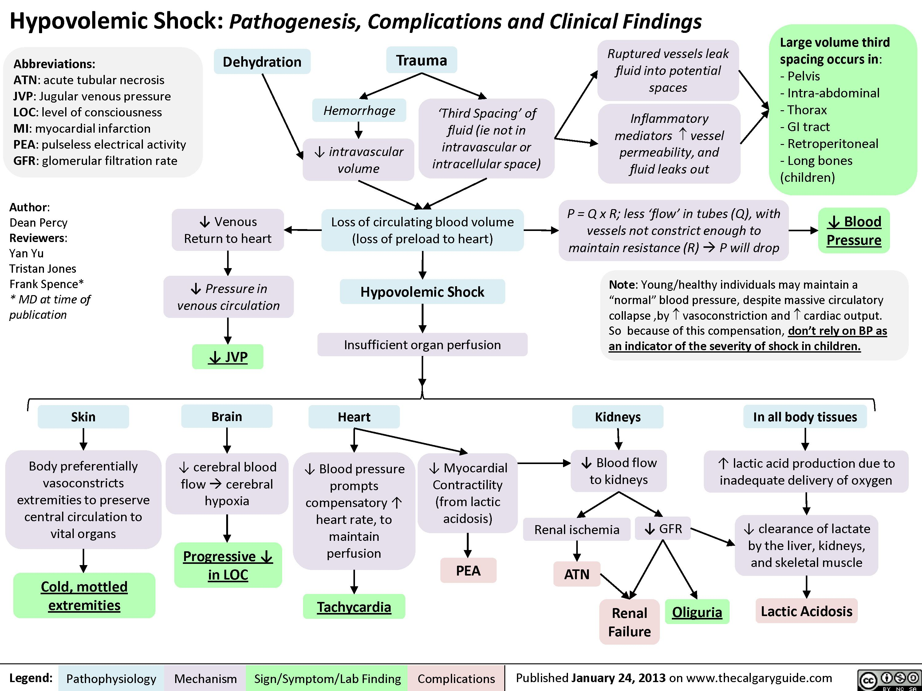 hypovolemic shock: pathogenesis, complications and clinical, Skeleton