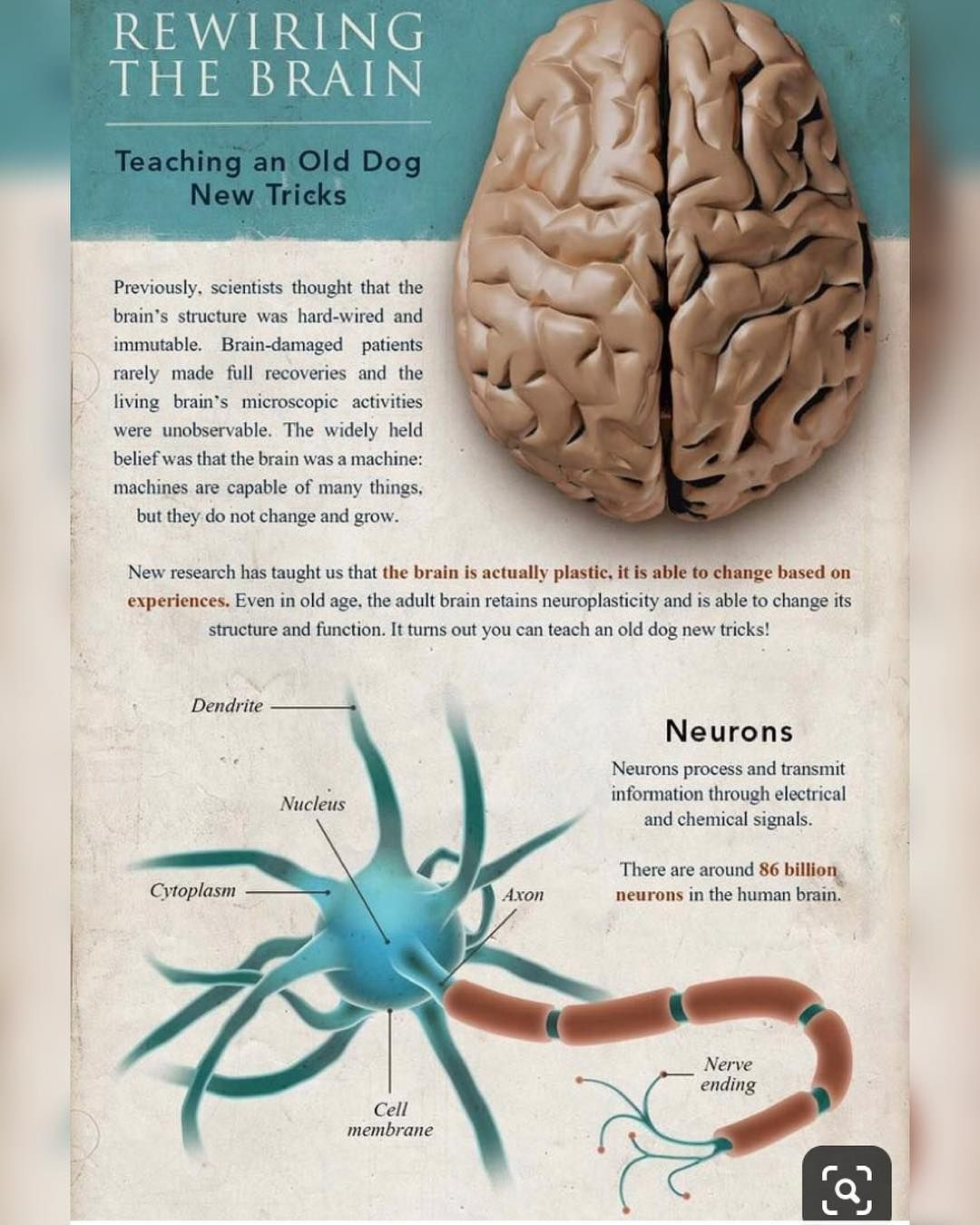 Neuroplasticity Begin To Change Life >> New The 10 Best Home Decor With Pictures Changing Your Life