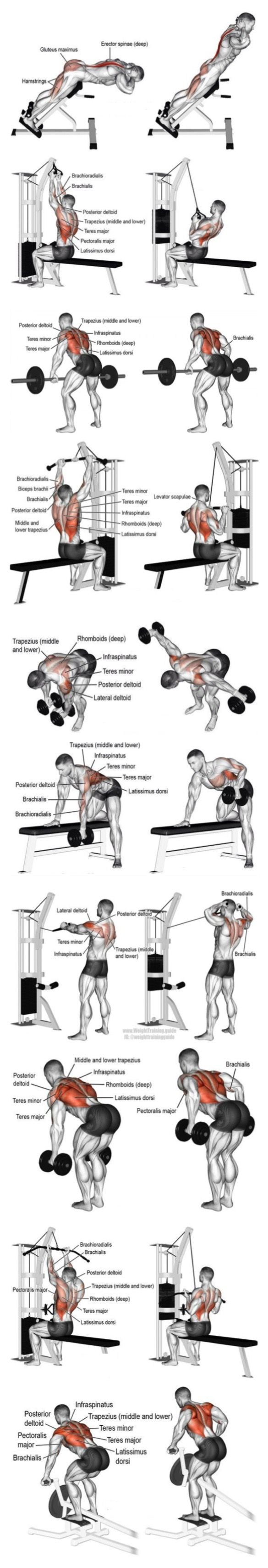 Schiena Body Building Pinterest Workout Exercises And Gym