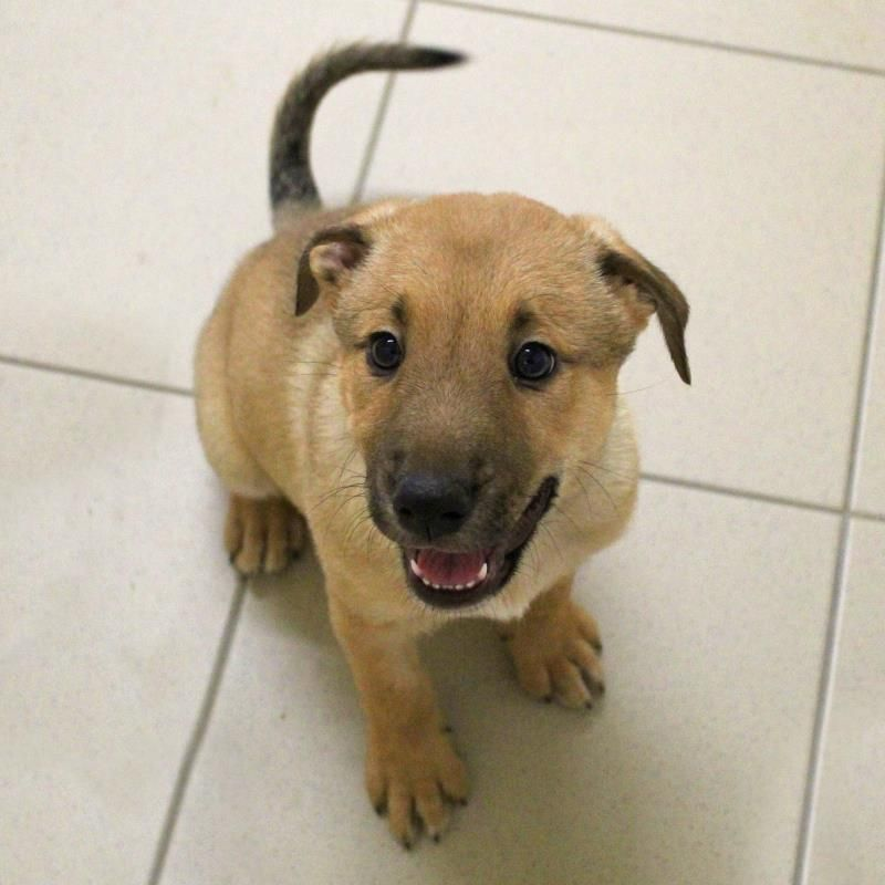 Adopt A Dog Pringle A Crossbreed Dogs Trust Dog Adoption