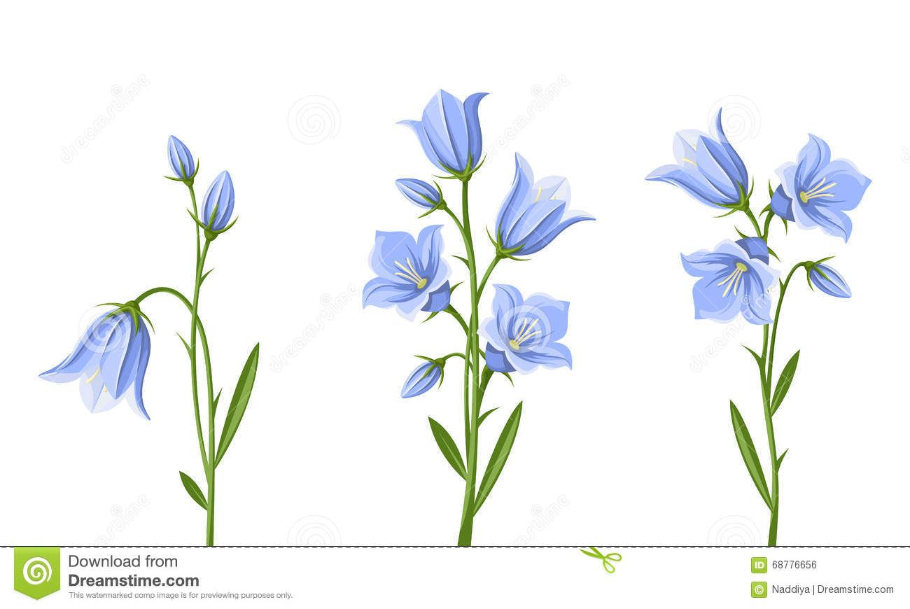 Photo about Vector set of blue bluebell flowers isolated