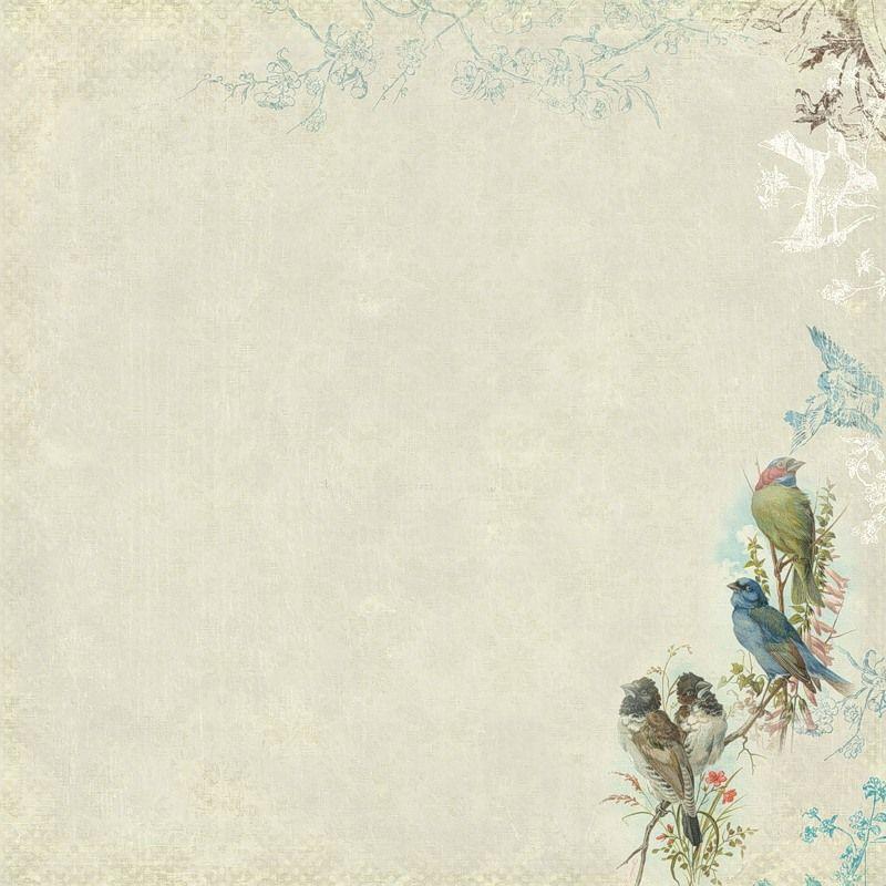 Фон для открытки птицы, дельфин анимашки