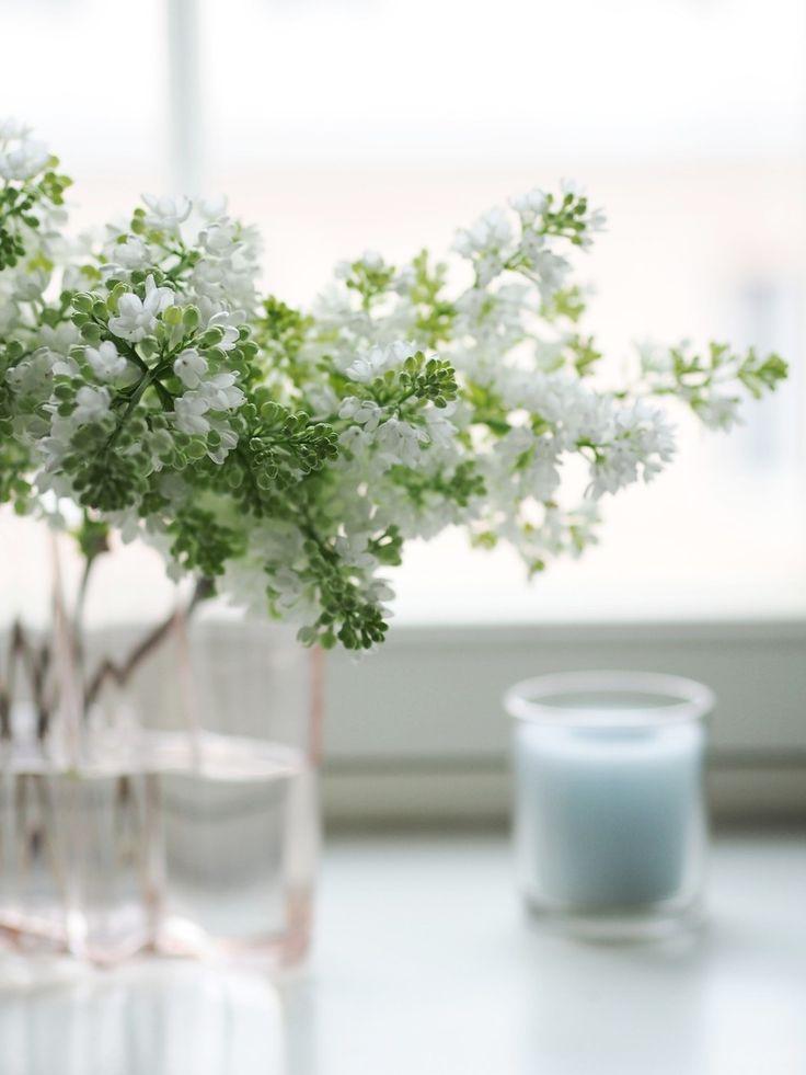 Lilacs   Pupulandia Blumen Dekoration