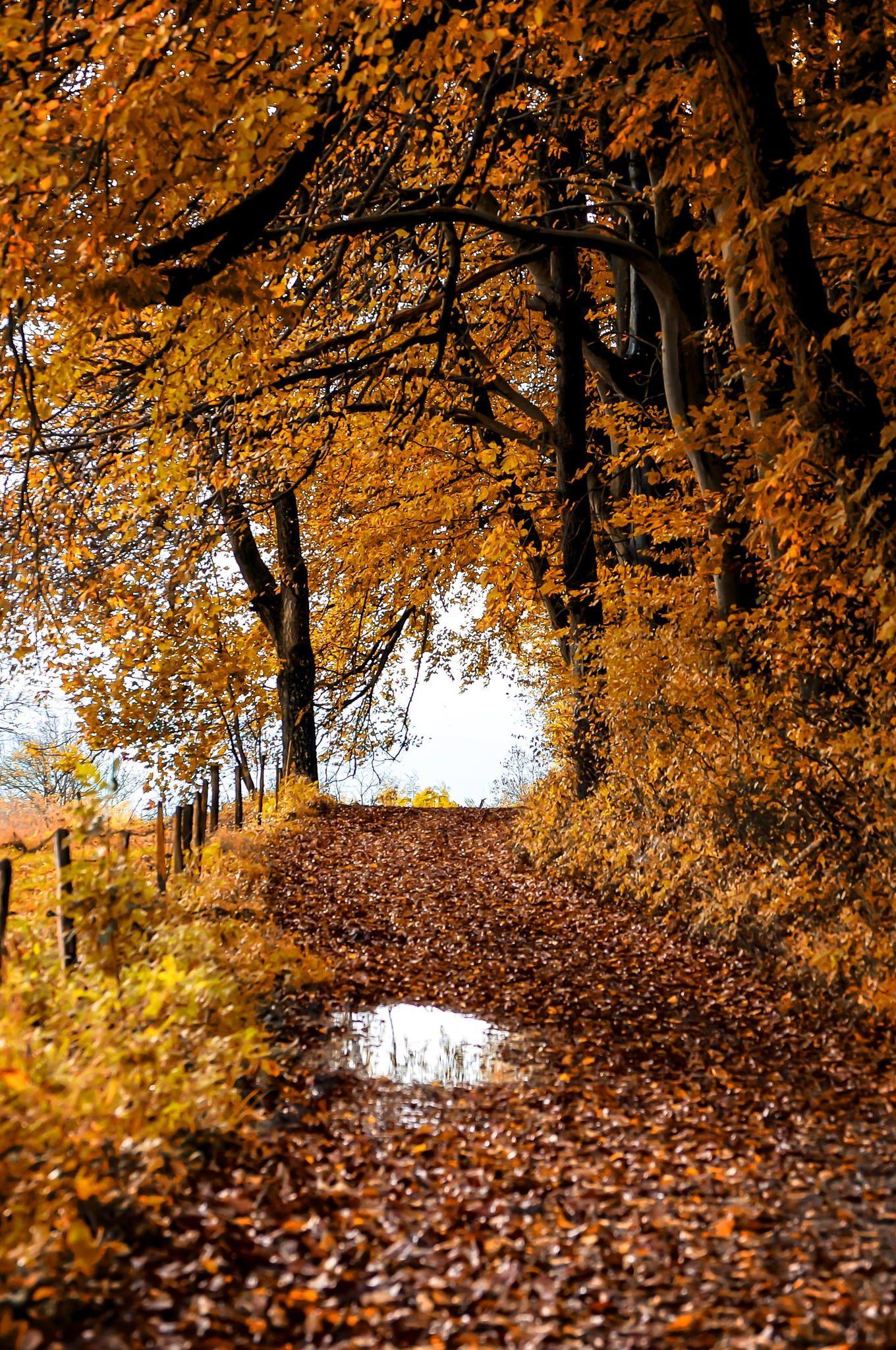 Sunday Walk Null Paysage Automne Paysage Le Magicien Des Couleurs