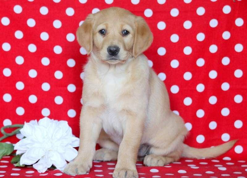 Keystone Pet Place Places Pets Mount Joy