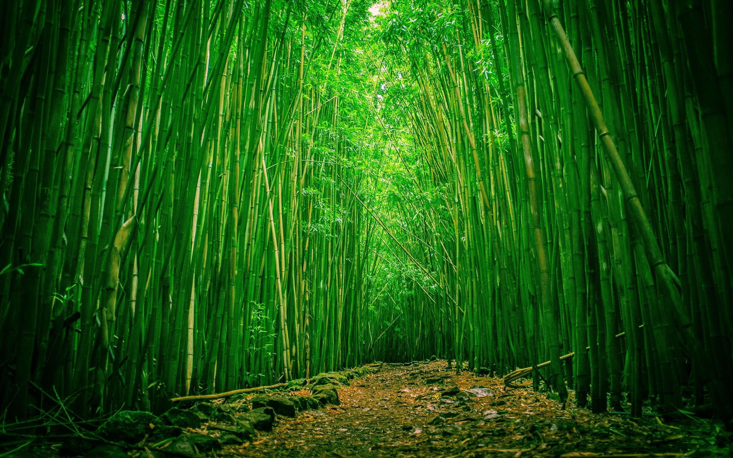 Bamboo Forest Wallpapers High Quality Download Free Land Views