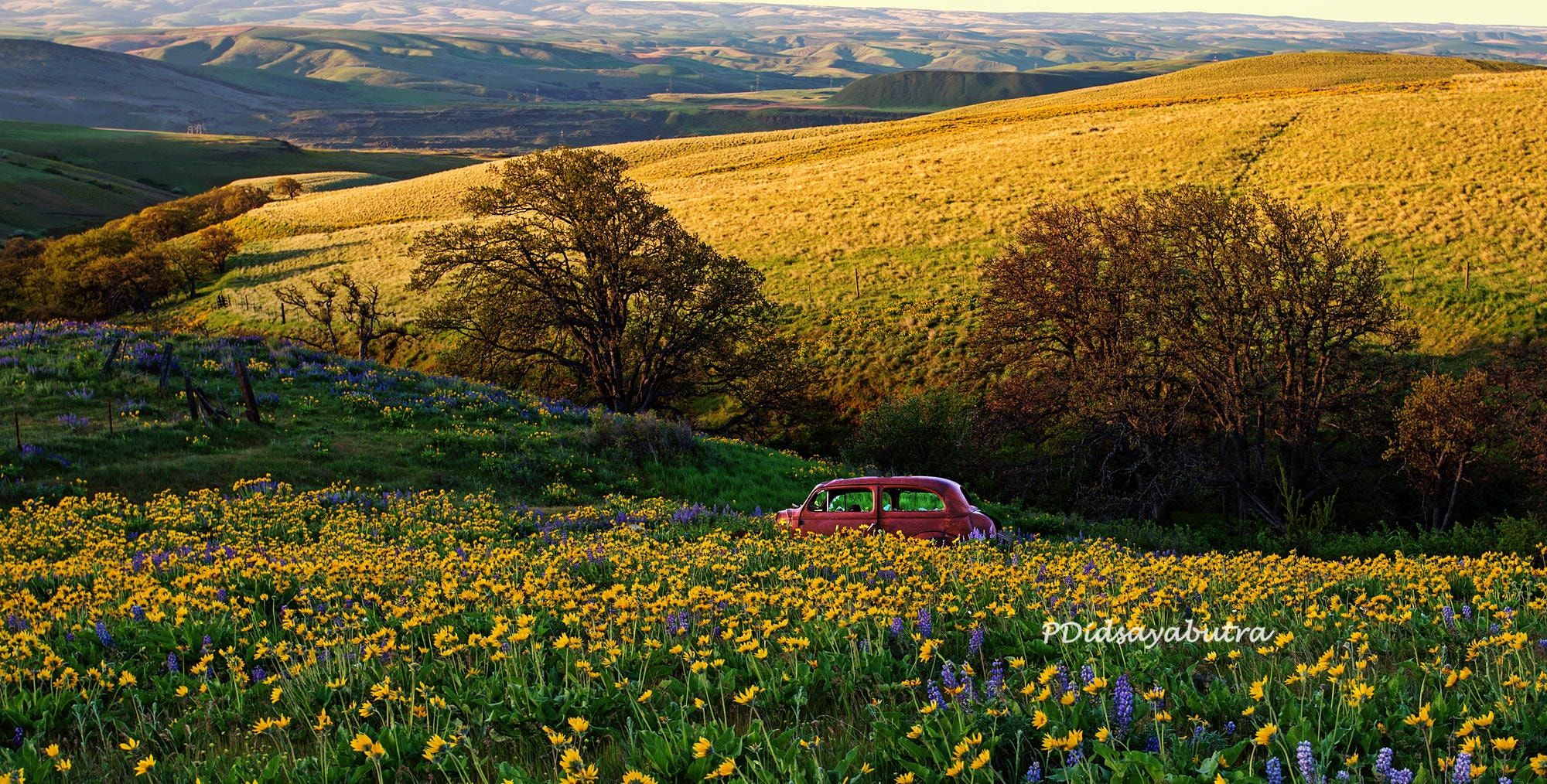 """Timeless - Spring wildflowers, Columbia River Gorge, Washington.  Best view with black background (press """"H"""" then """"M"""")"""