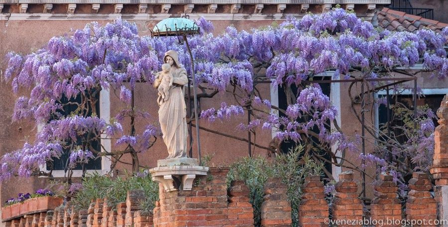 venezia blog: Wisteria Hysteria: 3 More Views from This Evening