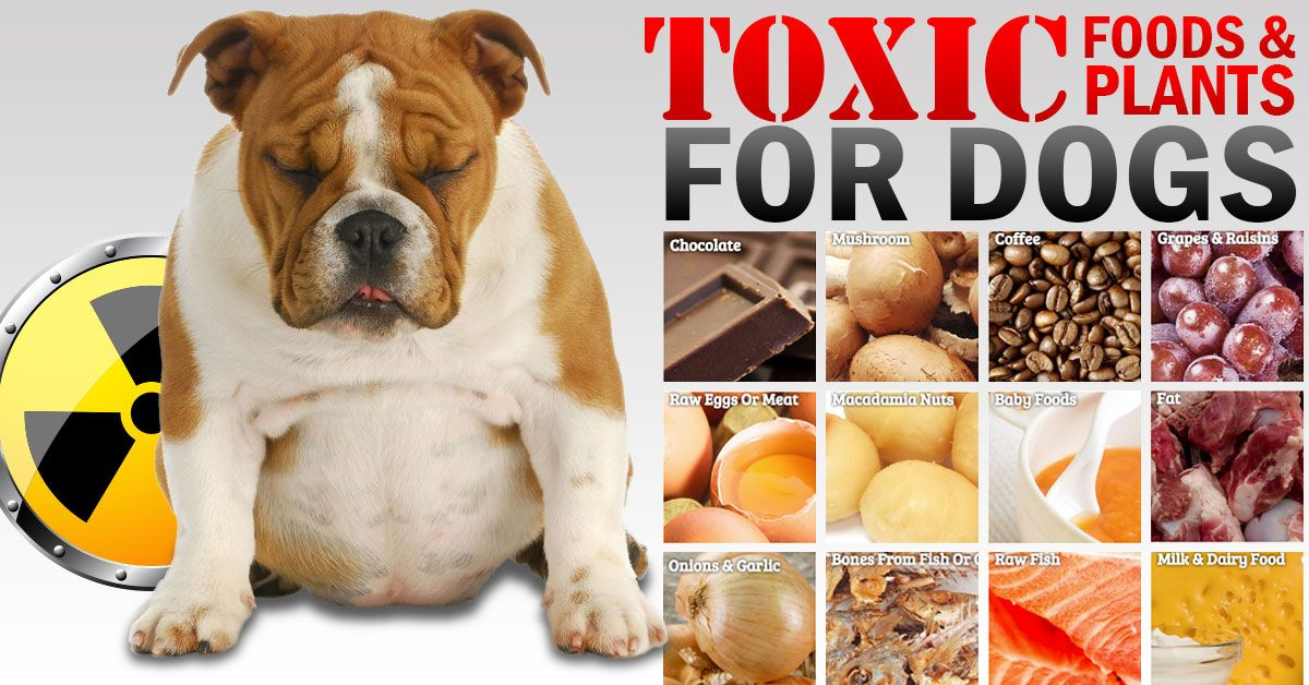 We Are Often Asked What Is Toxic To Dogs Some We Know About