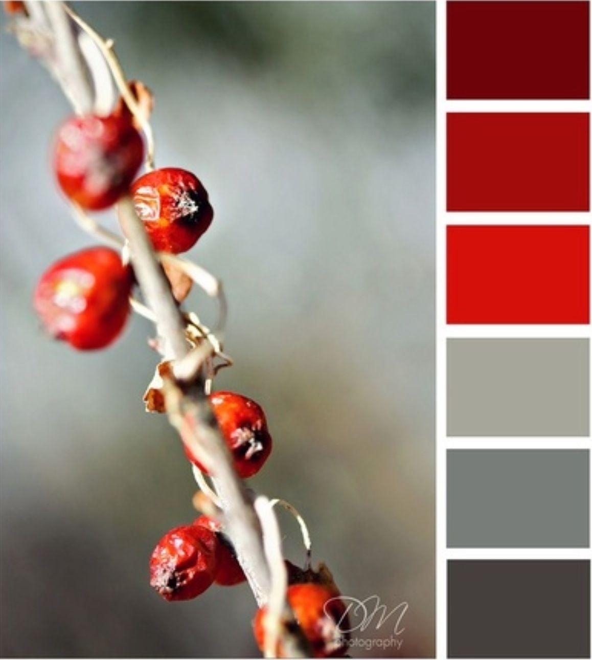 Lounge Theme Red Colour Palette Grey Color Palette Colour Schemes