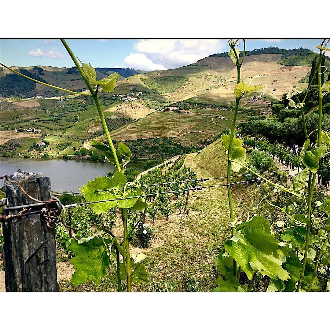 Quinta do Seixo Pinhao Douro Valley Portugal #douro #bestvacations #seyahat #tourist #rehber # by istanbultrip34