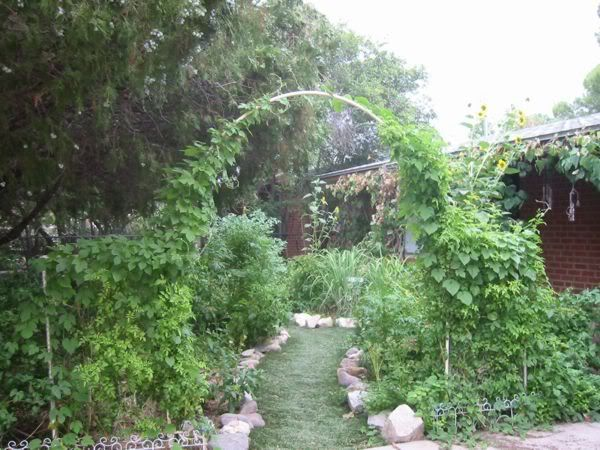 Another Pic Of The PVC Garden Arch
