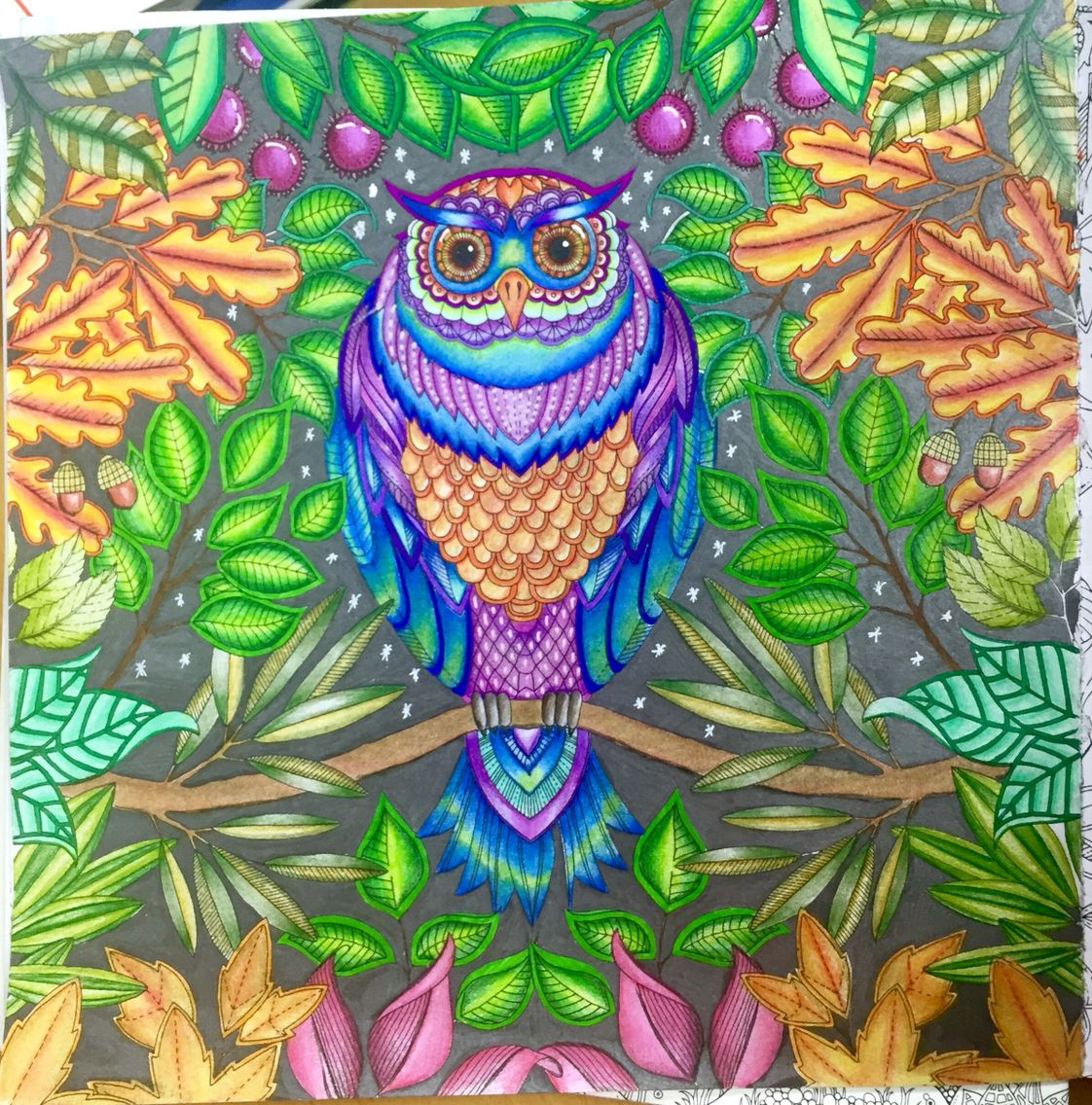 The Owl From Secret Garden By Johanna Basford Used Colored Pencils