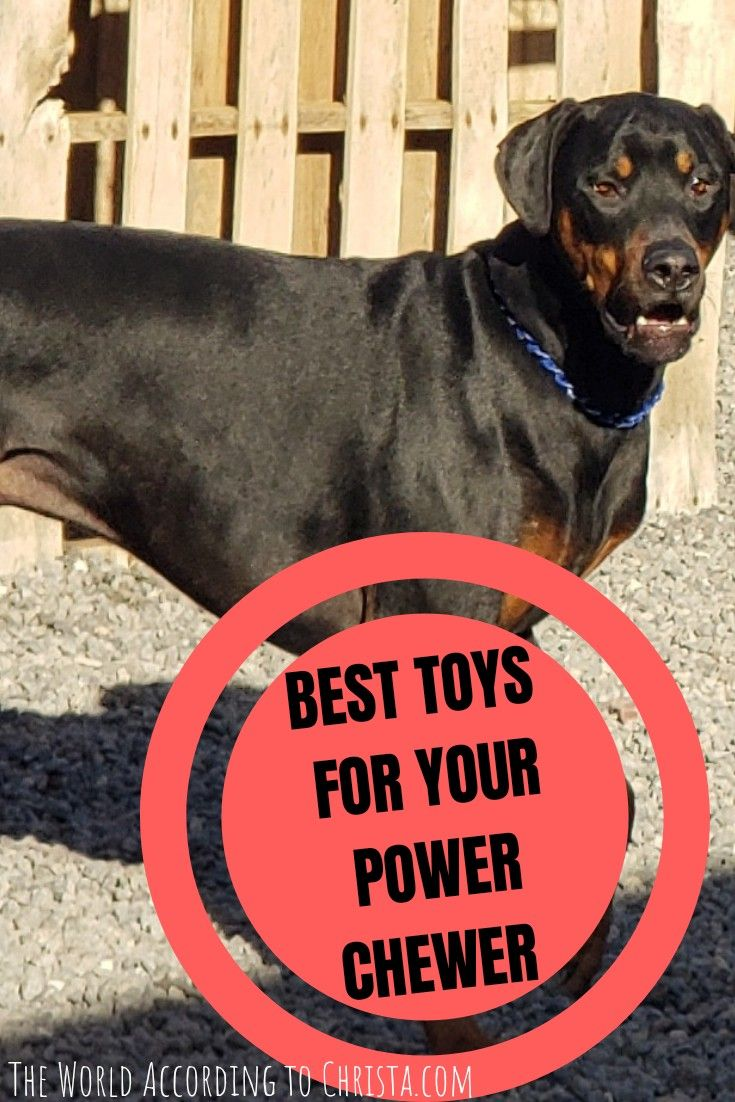 How To Raise Happy Dogs Dog Breeds Bulldog Breeds Tough Dog Toys