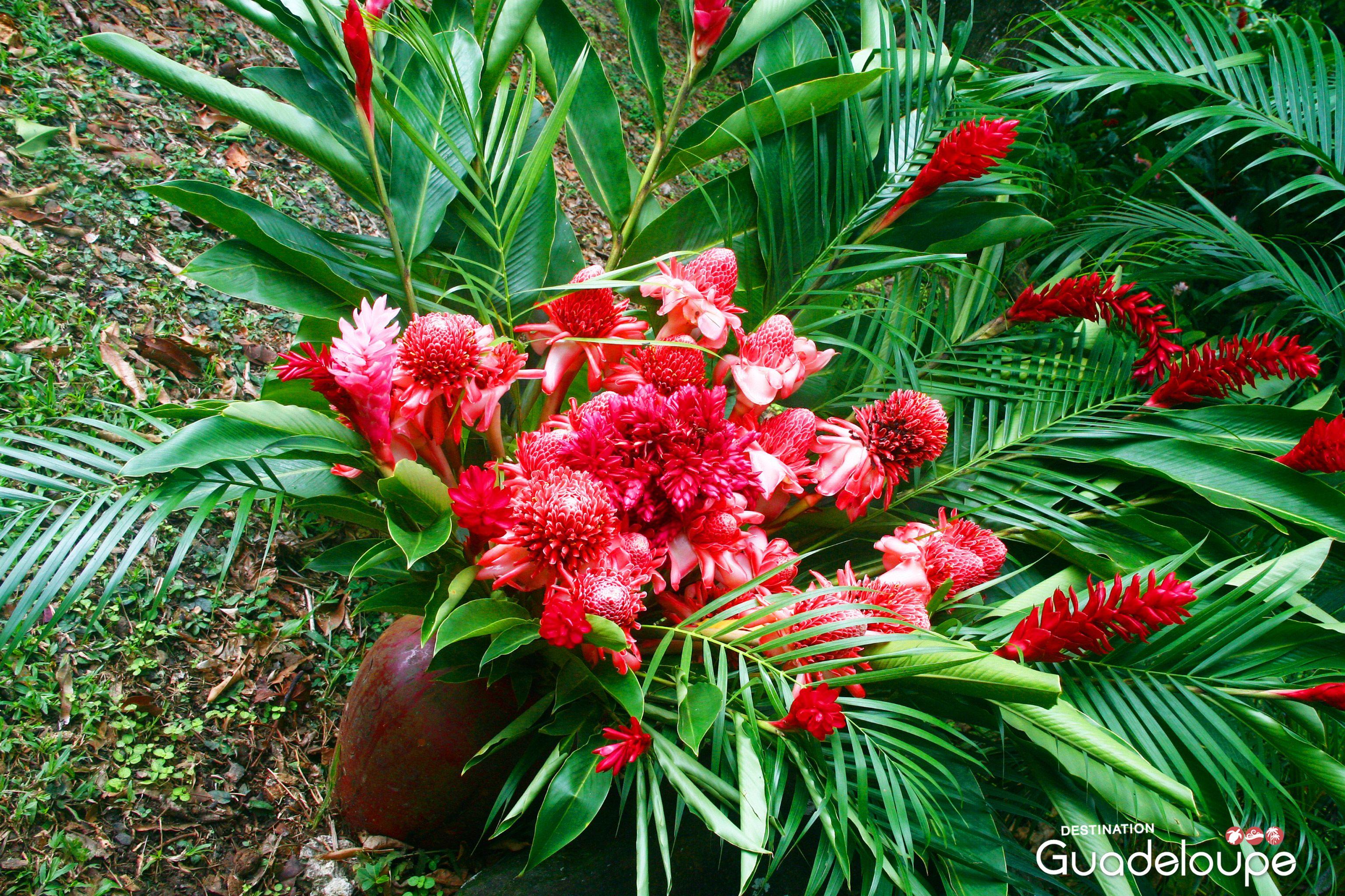 Bouquet de fleurs tropicales domaine de severin sainte for Bouquet de fleurs wiki