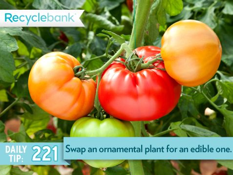 Swap an ornamental plant for an edible one.