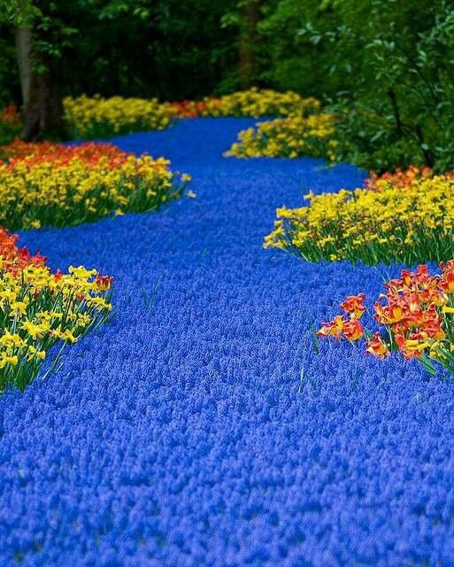 Lisse,south holland, the most beautiful garden I've ever seen!