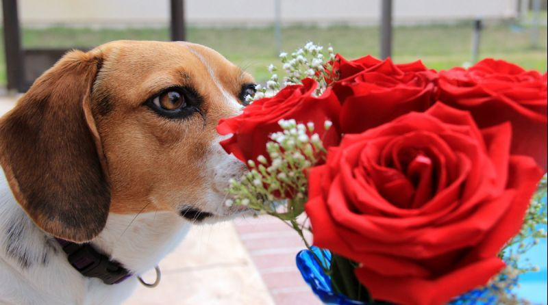 Oh You Bought These Flowers For Me Truly You Shouldn T Have But I M So Glad That You Did Said A Sweet Littl Pampered Puppies Dog Photograph Puppy Photos