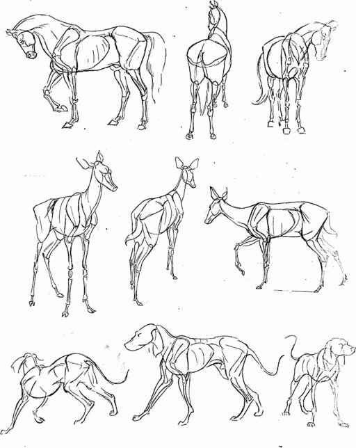 Line Art Tips : Animal drawing tips google search references for
