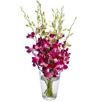 Product Purple Orchids Dendrobium Orchids Orchids