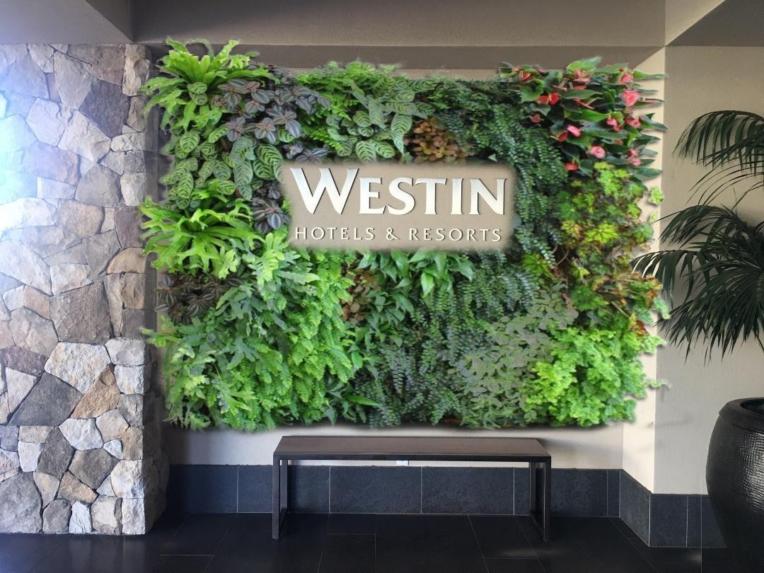 A Beautiful Piece By Green Wall Designs Maui At The Westin Green Wall Wall Design Plant Wall