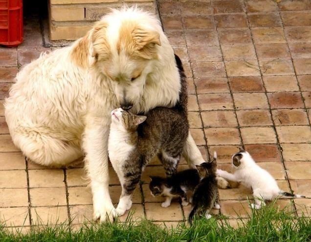 Mother cat showing kittens to dog