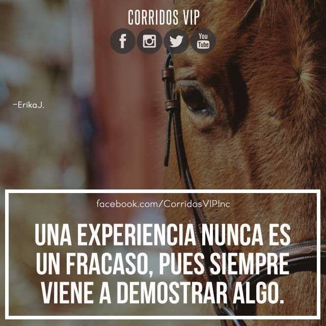 Nunca es fracaso.!   ____________________ #teamcorridosvip #corridosvip #corridosybanda #corridos #quotes #regionalmexicano #frasesvip #promotion #promo #corridosgram