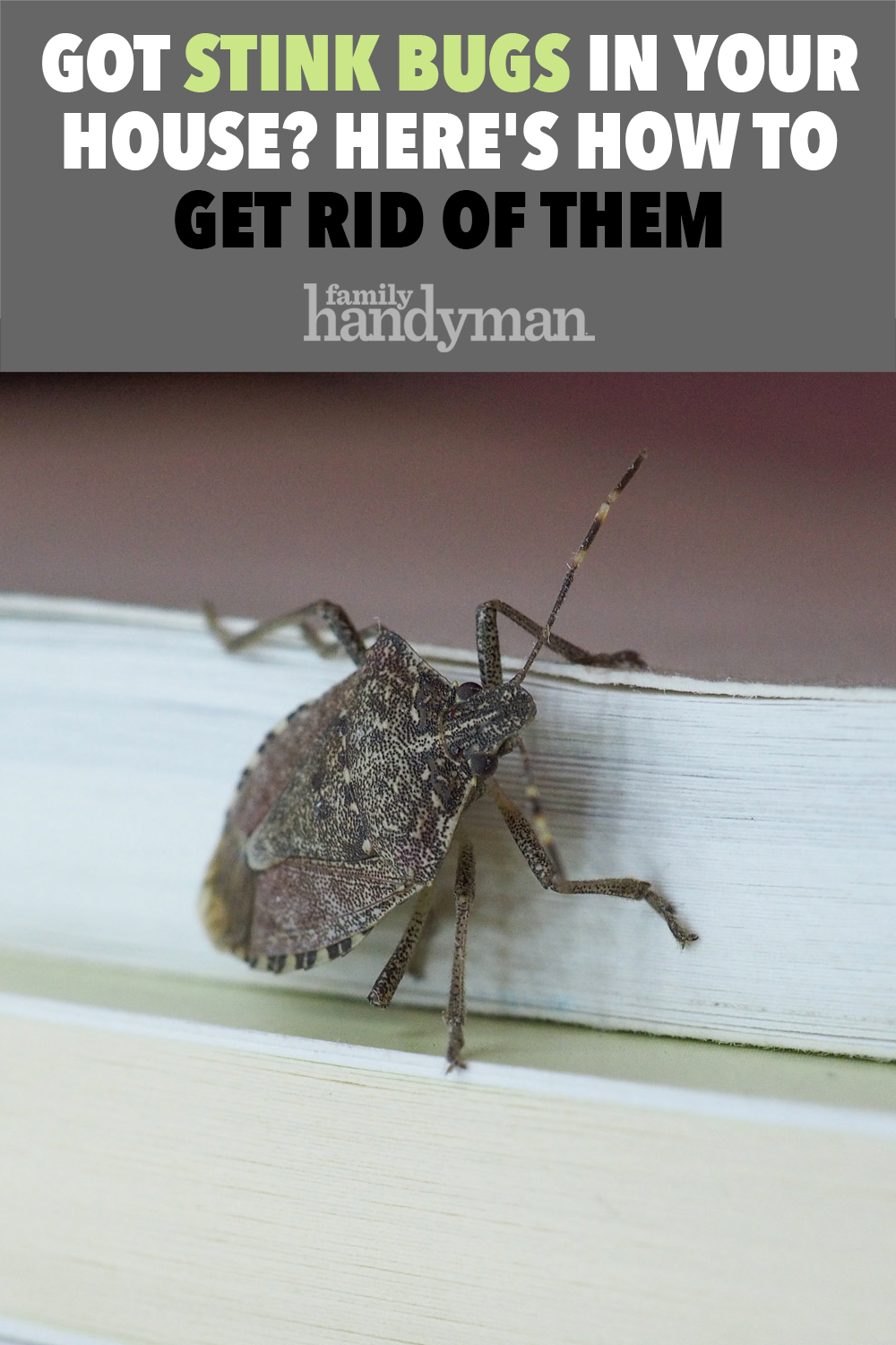 How To Get Rid Of Beetle Bugs In The House