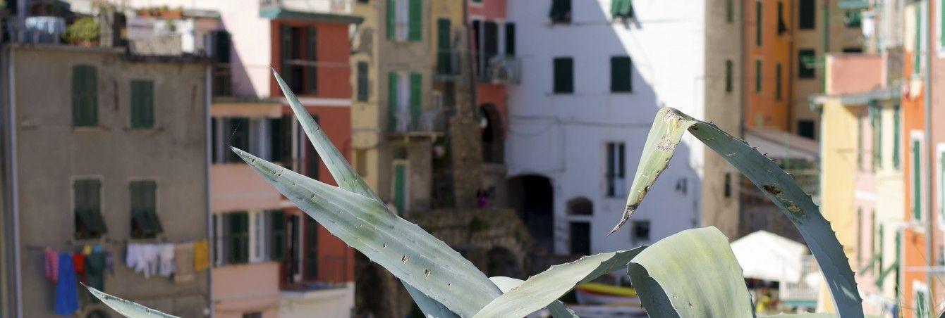 Cinque Terre, Italienblog