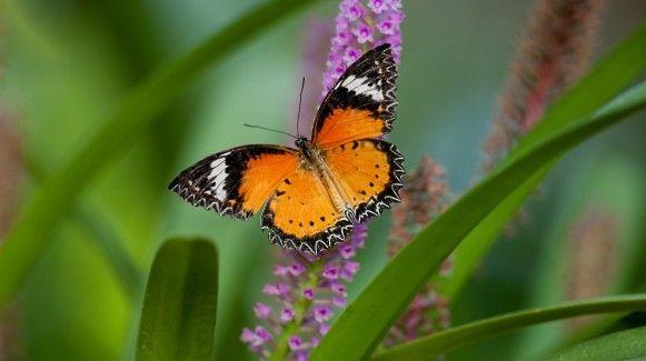 58d143603fcf5a4b982deb62205c8c0f - Meijer Gardens Butterfly House Grand Rapids