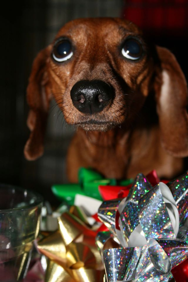 All I Want For Christmas Is Weenie Dog Kisses Funny Dachshund