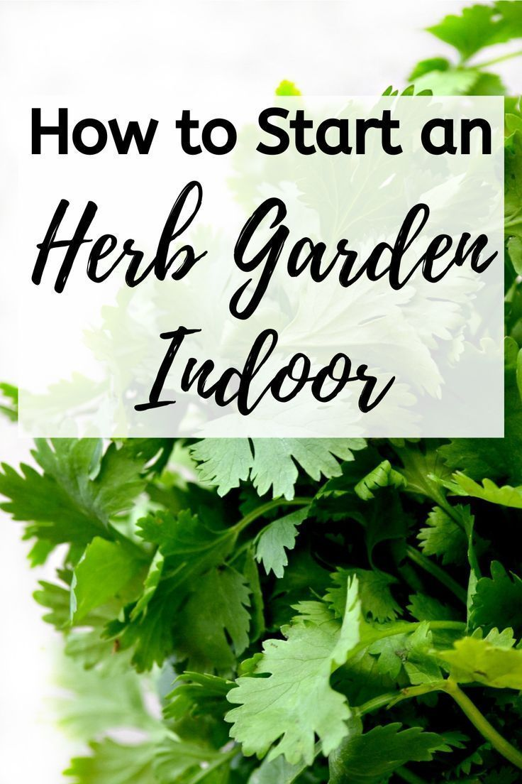 How to Start an Herb Garden Indoor - Blooming Anomaly #outdoorherbgarden You can start an herb garden indoor or outdoor. Even though this post is about outdoor herb gardening, many of the concepts can also be applied to indoor herb gardens. Click on the pin to learn more about how to start an herb garden indoor. #herbgarden #herbs #indoorherbgarden #herbgardenideas #outdoorherbgarden How to Start an Herb Garden Indoor - Blooming Anomaly #outdoorherbgarden You can start an herb garden indoor or o