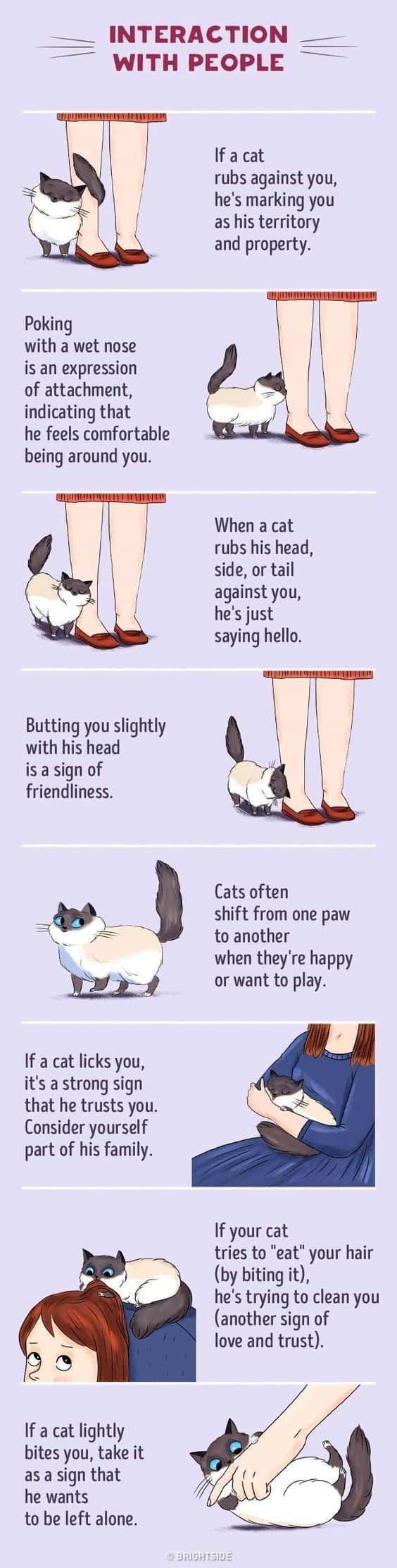 Are You One Of Many That Would Love To Have Cat Behavior Explained We Have Lots Of Infographics That Will Teach You How T Cat Behavior Cat Language Crazy Cats