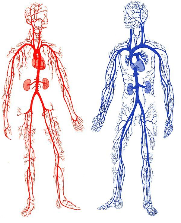 Image Result For Arm Vein Metal Diagrams The Fresh Ideas
