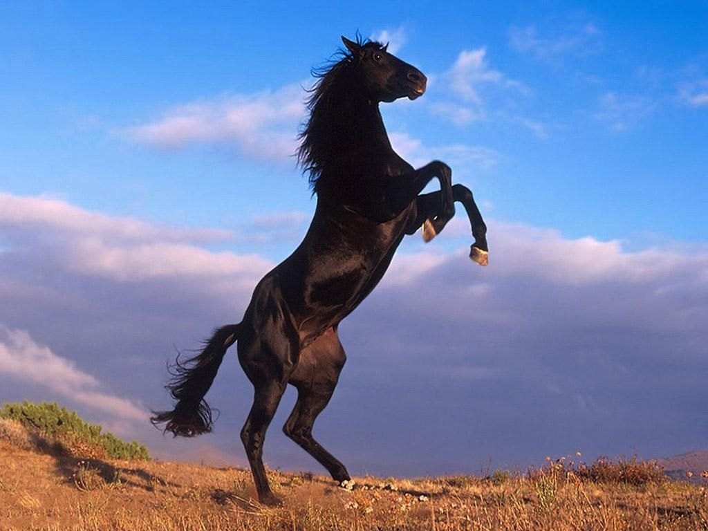 Horses And Dogs Horses Beautiful Horses
