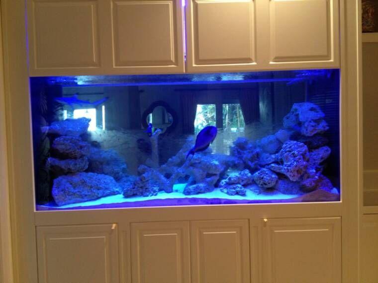 Image Gallery home aquarium shark tank