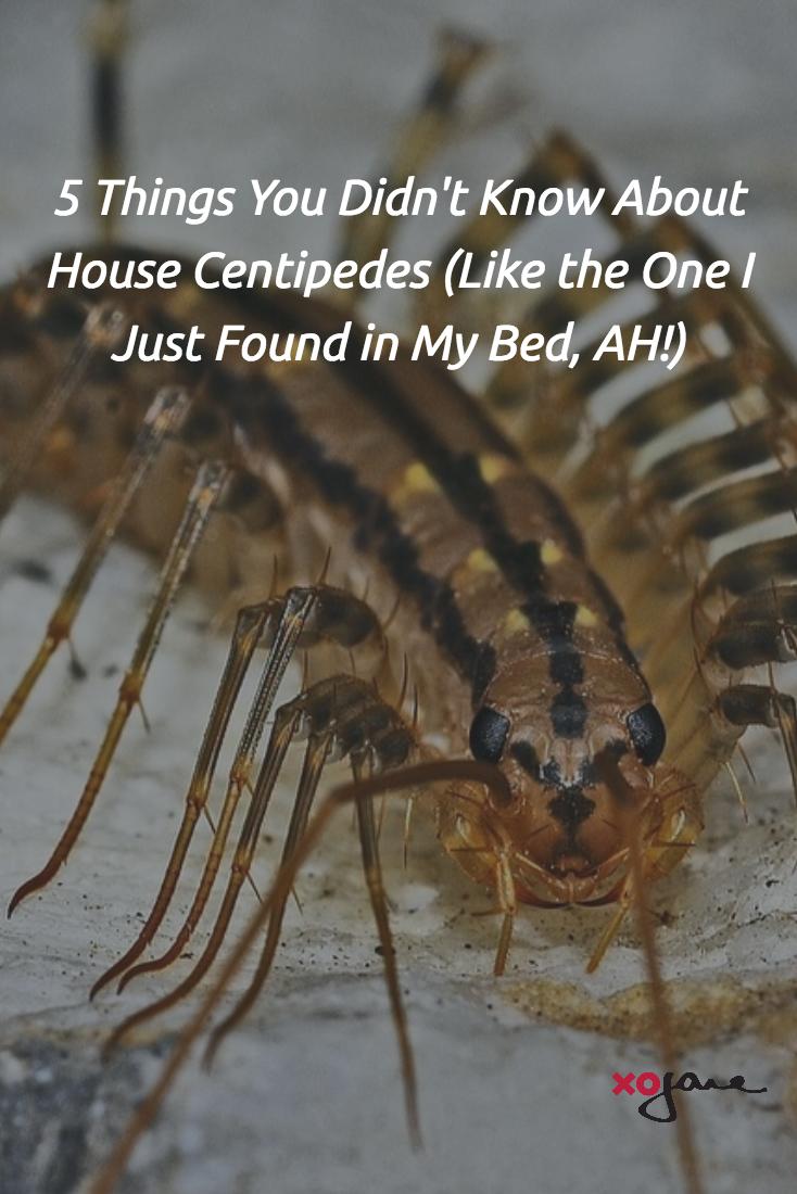 Felsebiyat Dergisi – Popular Seeing Centipede In House Meaning