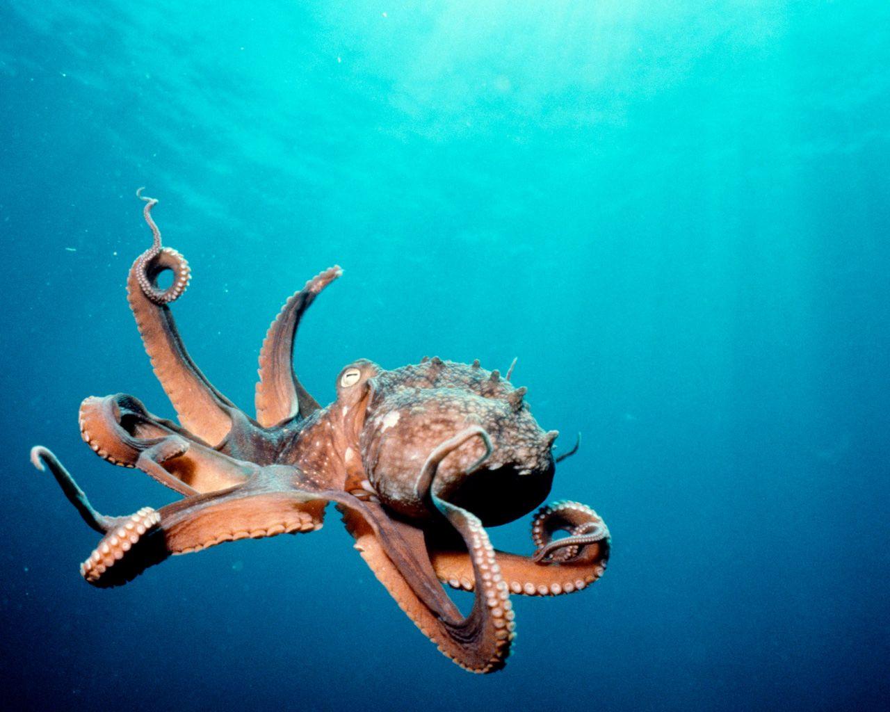 Deep Ocean Life