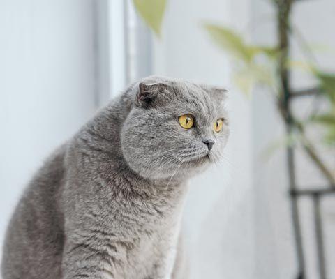 Коты умеют наслаждаться жизнью и говорить 'нет'. Когда с котов стоит брать пример.