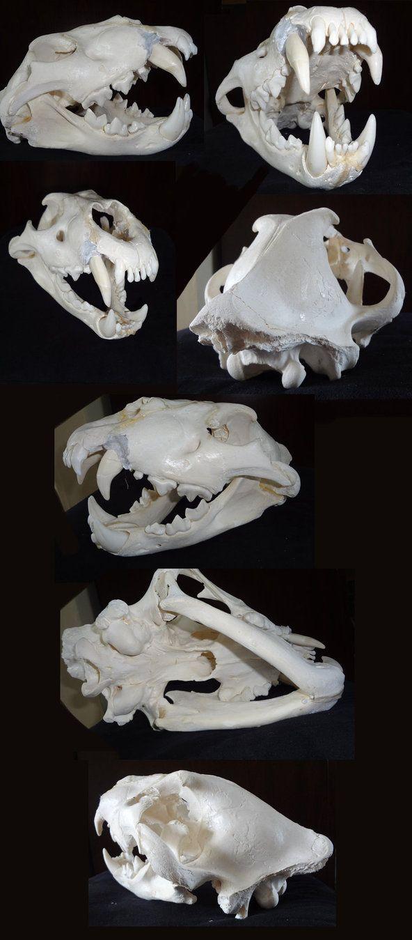 lion skull by c3rmen on DeviantArt | All Things Skull ...