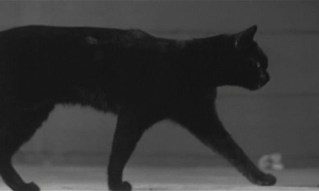 A black cat stalks through the iconic opening credits by Saul Bass for Walk on the Wild Side (1962).