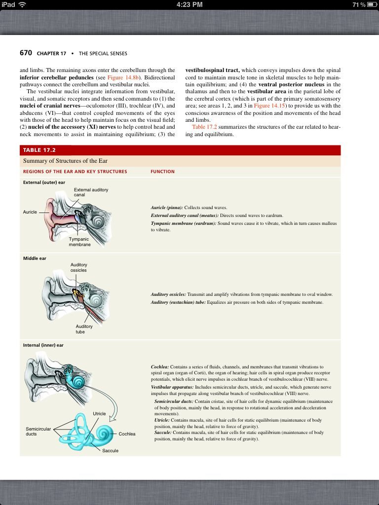 Principles of Anatomy and Physiology, Chapter 17, The Special Senses ...