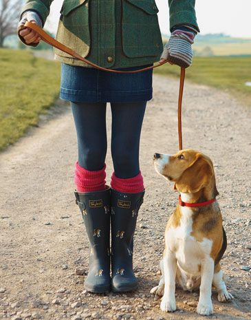 Beagle Fashion Style Preppy
