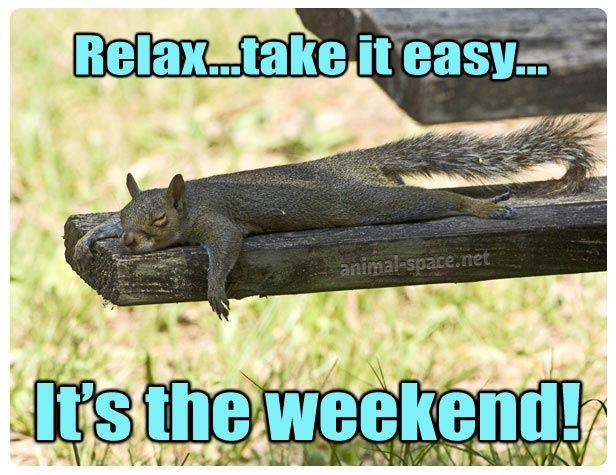58d4234f502b10cc8e50a5689fb39124 relax take it easy it's the weekend squirrel meme animals