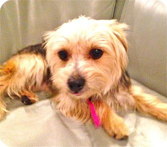 Pet Not Found Kitten Adoption Pets Dog Adoption