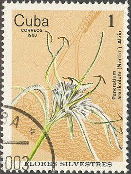Znaczek: Pancratium arenicolum (Kuba) (Wild Flowers) Mi:CU 2518,Yt:CU 2228