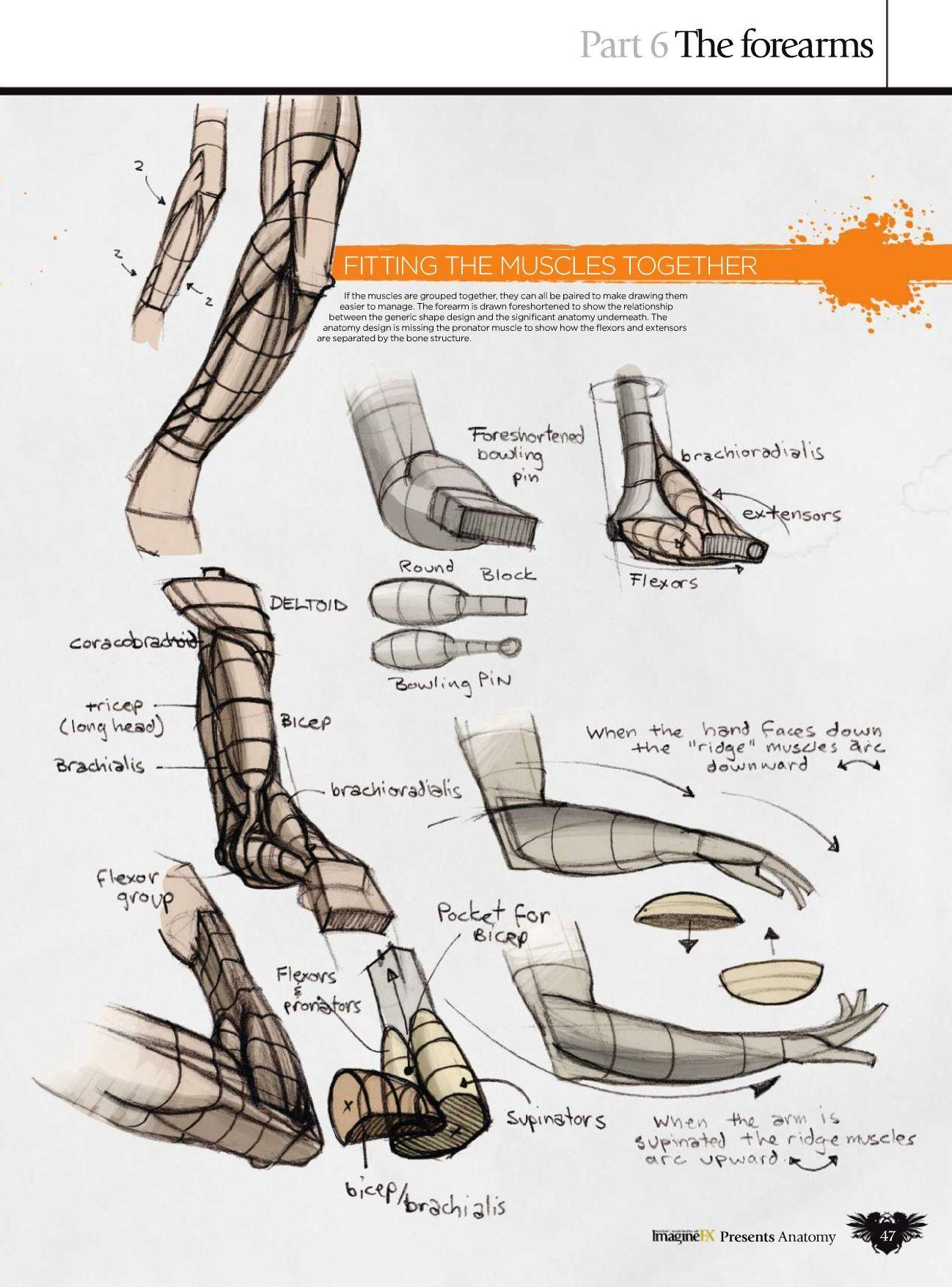 Book Scans | Anatomía y Músculos