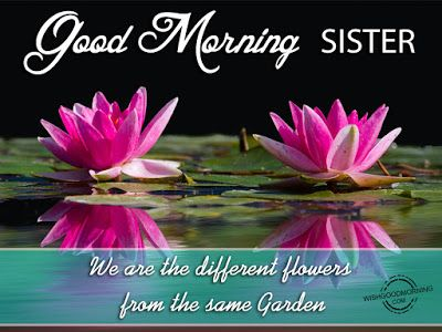 Pin By Wishes And Messages On Sister Good Monring Pinterest
